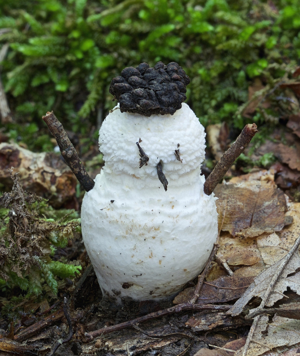 Frosty the Fungus
