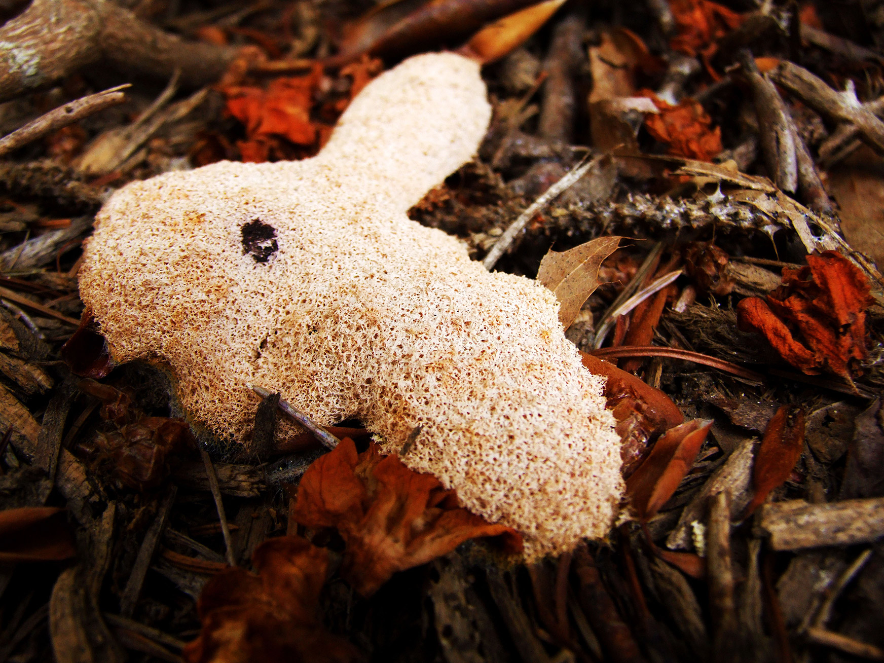 Bunny Shaped Fuliho septica by Autum Mallett