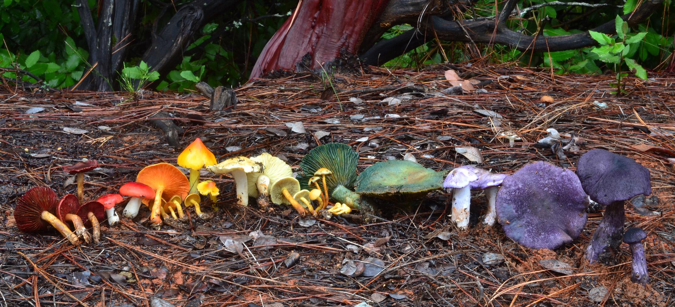 Mushroom Rainbow by Alissa Allen
