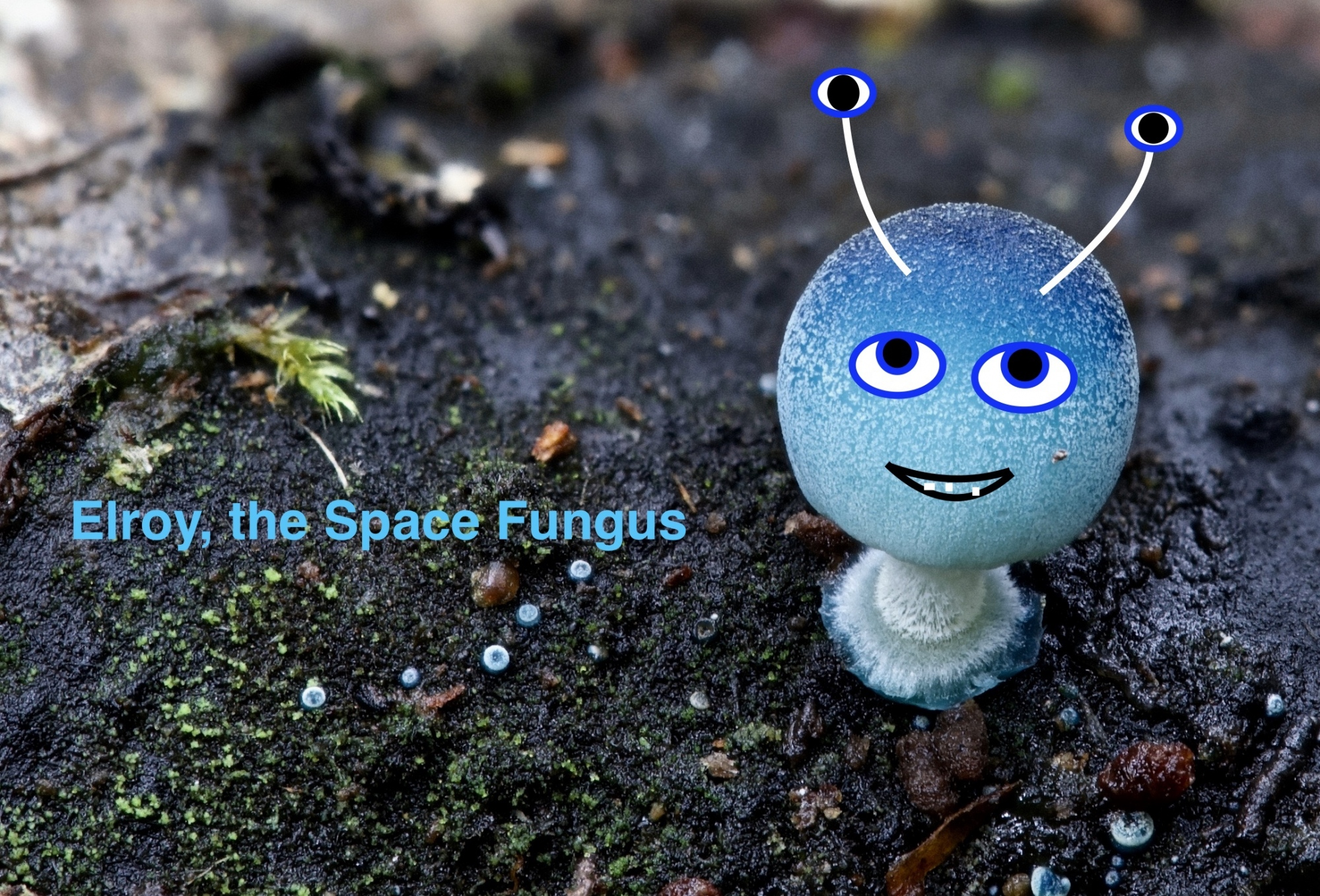 Judges Option 1st place Elroy the Space Fungus by Mark Bower