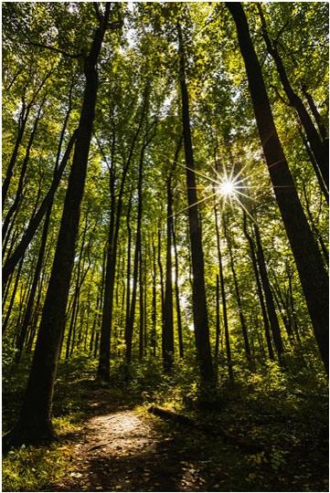 Photo by N. Lewis, Shenandoah National Park