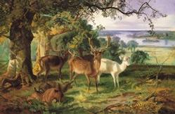 deer in the shade