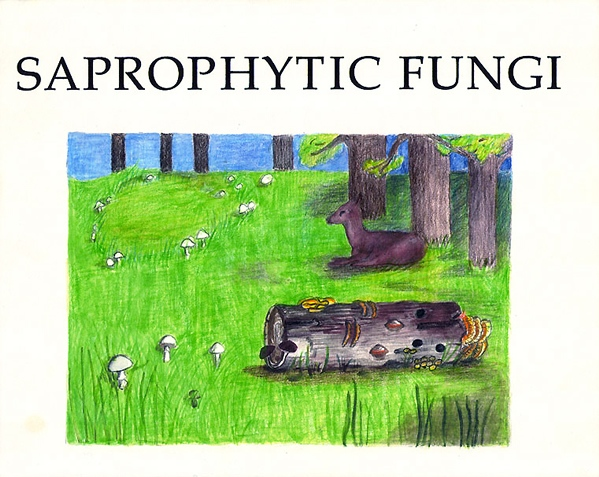 Saprophytic Fungi