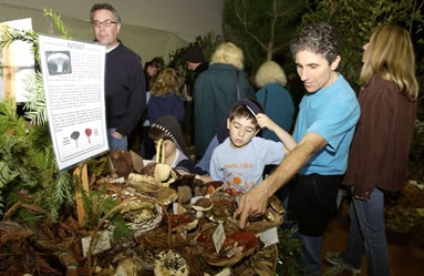 Mushroom display at FFSC Fair