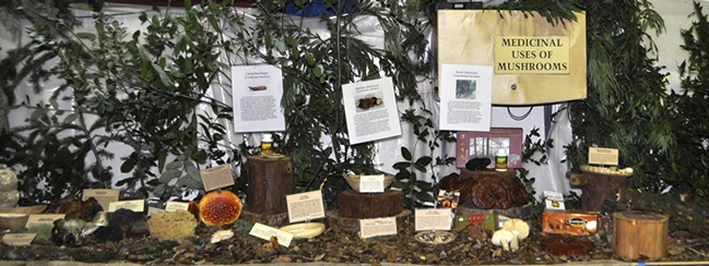 Medicinal Mushroom display at 2011 FFSC fair
