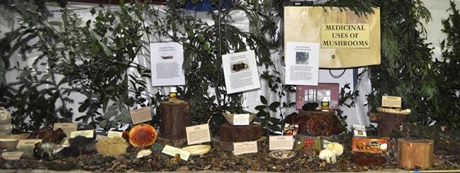Medicinal Mushroom display at 2011 FFSC fair
