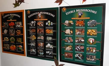 FFSC mushroom posters