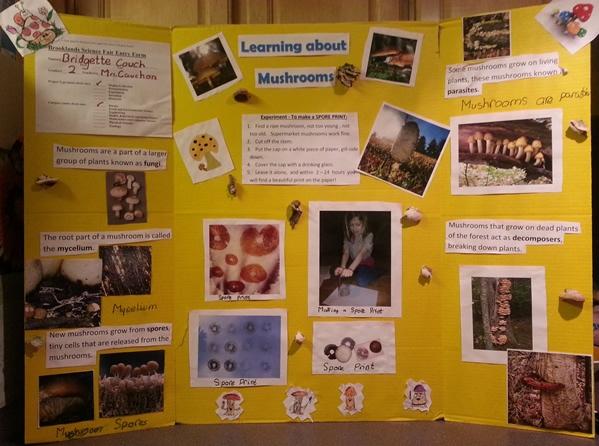 science fair poster