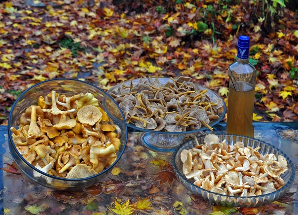 Chanties, Hydnum and Chanty vodka