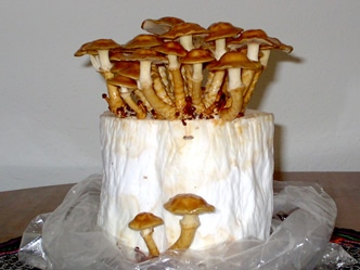 Cultivation Substrates North American Mycological