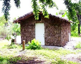 banana leaf grow house