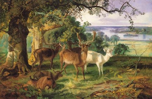 joseph adam, deer in the shade